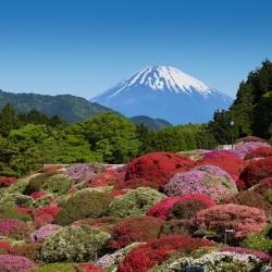 【インスタ映えスポット♥】5月のおでかけは、箱根『小田急 山のホテル』の つつじ・しゃくなげフェアへ!