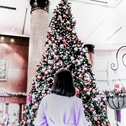 【カメラ片手に立ち話。@sakiiiya】#18 クリスマスに向けて、フォトアイディアでカウントダウンを
