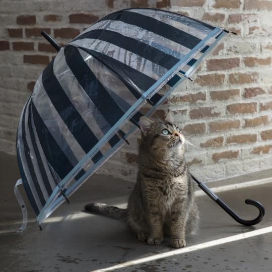 雨の日も楽しく【Francfranc】で揃うレイングッズ