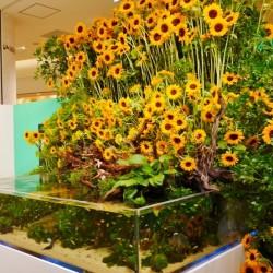 都会で緑や自然を楽しむイベント【Green Life Festival】グランツリー武蔵小杉にて開催