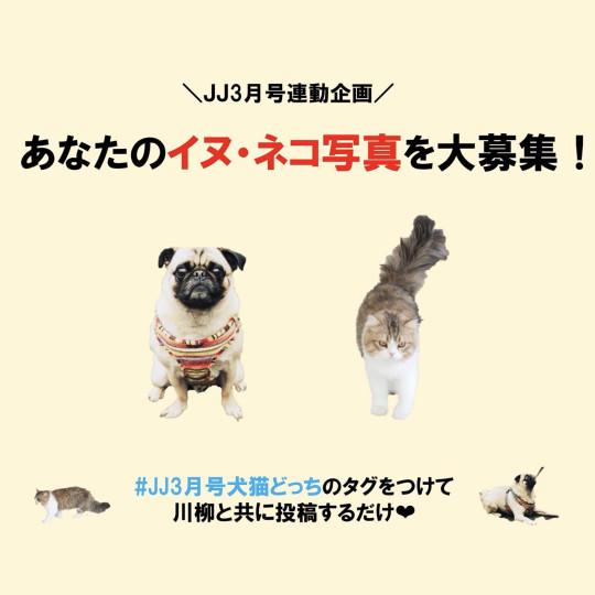 \JJ3月号連動企画/あなたのイヌ・ネコ写真を大募集!