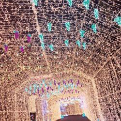 行かなきゃ損!日帰りで行けるクリスマス絶景3名古屋編