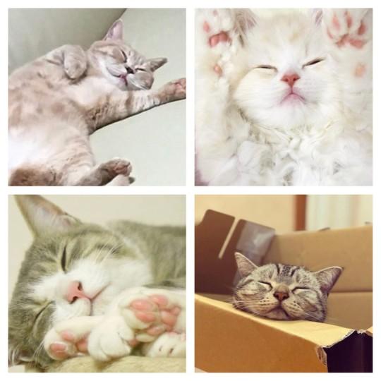 働きたくない月曜に……最高に癒される❤猫ちゃんの寝顔7選